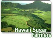 Hawaii Sugar Farmers